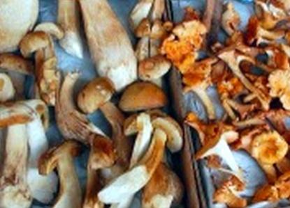 Сушеные грибы в мультиварке рецепты с фото