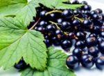 Пятиминутка из смородины черной рецепты с фото