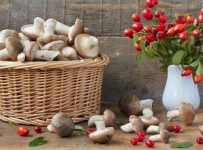 Как заморозить грибы. Рецепты замораживания грибов пошагово фото