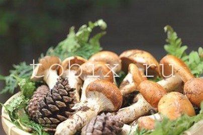 Как варить грибы и сколько перед жаркой, заморозкой