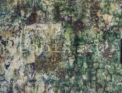 Плесень (грибок) на стенах фото